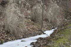 Frozen stream in the forest stock images
