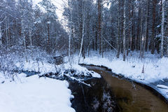 Frozen stream in winter forest Royalty Free Stock Photography