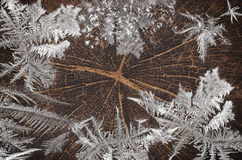 Frozen stump of old oak tree felled - section of the trunk with annual rings. Stock Image