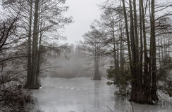 Frozen Stumpy Lake with Fog Stock Photography
