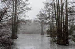 Frozen Stumpy Lake with Fog Stock Photography
