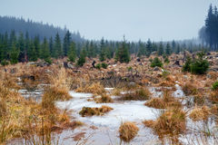 Frozen swamp in Harz mountains Royalty Free Stock Photography