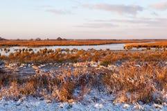 Frozen swamp in sunrise Stock Photos