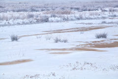 Frozen swamp in winter Royalty Free Stock Images