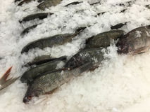 Frozen (Tilapia) fishes. Stock Photography