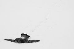 Frozen to death. Pigeon frozen to death in cold winter day royalty free stock photos