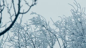 Frozen Top Of a Trees stock footage