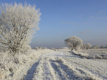 Frozen track with trees Royalty Free Stock Image