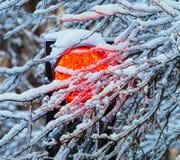Frozen traffic lights Stock Photography