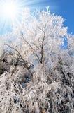 Frozen tree. Winter landscape with hoar frost on trees Royalty Free Stock Photo