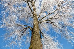 Frozen tree Royalty Free Stock Image