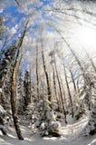 Frozen tree Royalty Free Stock Image