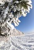 Frozen tree Stock Image