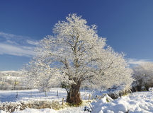 Frozen Tree. Stock Photo