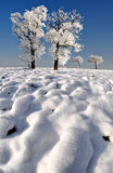 Frozen tree. In Czech Republic Stock Photos