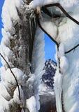Frozen tree. In Tatranska Lomnica - High Tatras mountains, Slovakia royalty free stock photography