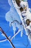 Frozen tree. In Tatranska Lomnica - High Tatras mountains, Slovakia stock photography