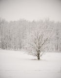 Frozen Tree Royalty Free Stock Photo