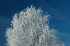 Frozen tree. And deep blue sky royalty free stock photos