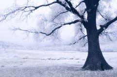 Frozen Tree. A frozen tree, in a strange light Stock Photography