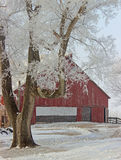 Frozen Tree with Barn Royalty Free Stock Photography