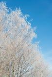 Frozen tree Stock Photos