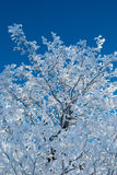 Frozen tree Stock Images