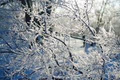 Frozen tree branch Royalty Free Stock Photo