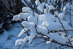 Frozen tree branch covered with snow. White frozen branches with frost and snow against the sky in winter. Frosty sunny day in December for Christmas Stock Photography