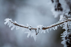 Frozen tree branch detail Royalty Free Stock Photo