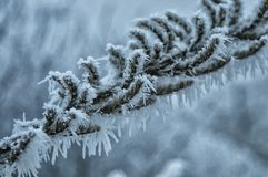A frozen tree branch with frosty icicles on a bitterly cold winters day stock photography