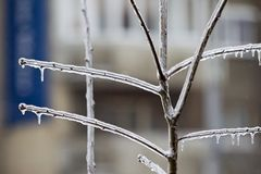Frozen tree branch in ice. In a middle of winter royalty free stock photos