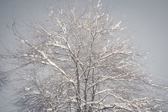 Frozen tree branch in the park or forest with snow and ice hoarfrost on the cold misty winter night image in nature. Winter in the nature, Frozen tree branch in stock photo