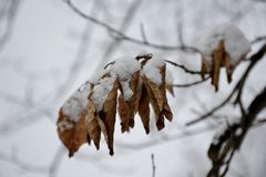 Frozen tree branch Royalty Free Stock Image