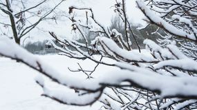 Free Frozen Tree Branch. Snow On Tree Snow In Park. Royalty Free Stock Photo - 108070795