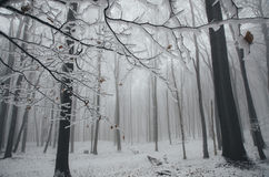 Frozen tree branch in winter in fantasy forest with snow Stock Images