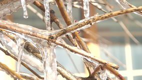 Frozen tree branch in winter. stock footage