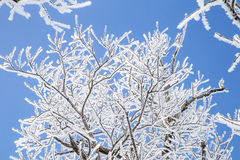 Frozen tree branches against blue sky Royalty Free Stock Image
