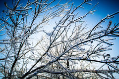 Frozen tree branches Stock Photography
