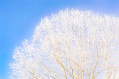 Frozen tree branches against the clear blue sky Royalty Free Stock Photos
