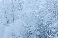 Frozen tree branches Royalty Free Stock Images