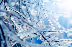 Frozen tree branches with blue icicles Stock Images