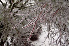 Frozen tree branches in ice Royalty Free Stock Photo