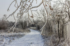 Frozen tree branches overlooking winter landscape with snow cove Royalty Free Stock Photos