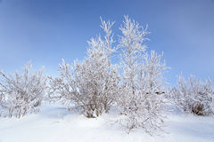 Frozen tree branches on the sky background in the winter forest Stock Photo