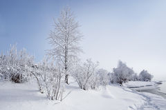 Frozen tree branches on the sky background in the winter forest. The water in the river floating mist. cold season Stock Images
