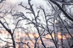 Frozen tree branches Royalty Free Stock Image