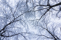 Frozen tree branches Royalty Free Stock Photography