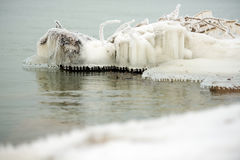 Frozen tree branches in water Royalty Free Stock Image