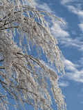Frozen tree branches Royalty Free Stock Photo